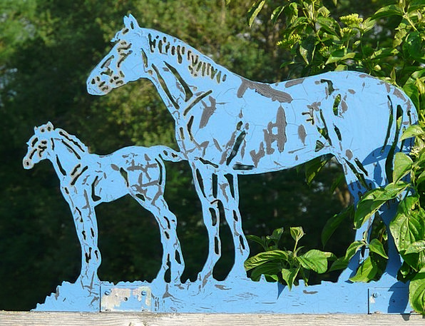 Horses Cattle Azure Metal Metallic Blue Foal Horse
