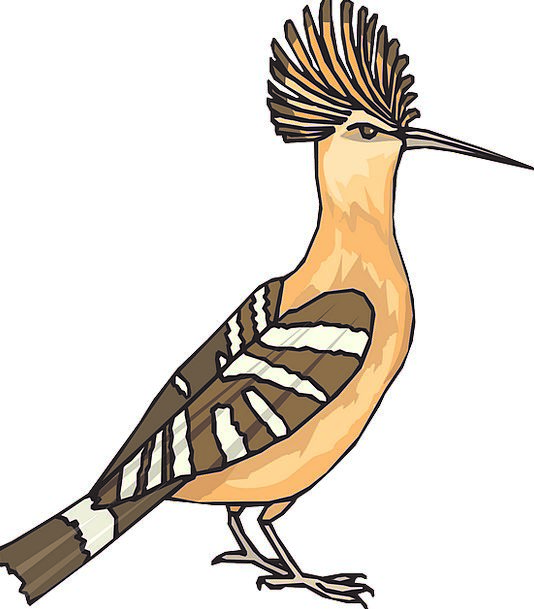 Angry Annoyed Fowl Hoopoe Bird Wings Annexes Feath