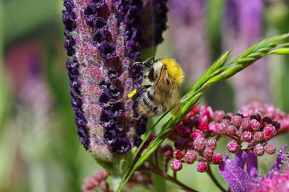 Hummel Purple Elaborate Lavender Violet Mauve Summ