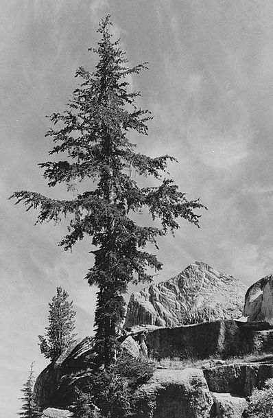 California Landscapes Nature Black And White 1930S