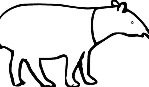 Tapir Animal Physical Malayan Hoof Long Extended T