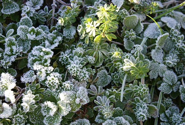Frost Ice Landscapes Ready Nature Plant Vegetable