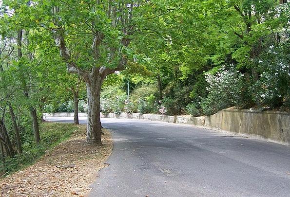 Road Street Traffic Transportation Trees Plants Av