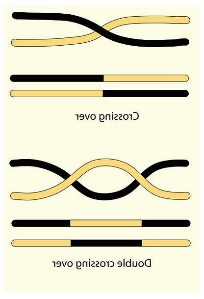 Science Discipline Cusp Gene Genetic factor Crosso