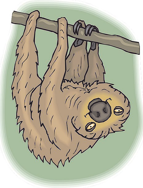 Sloth Laziness Content Face Expression Happy Tree