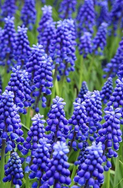 Bed Divan Blossom Bloom Grape Blue Azure Garden Co