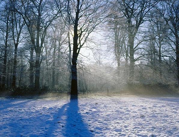 Snow Snowflake Sapling Winter Season Tree Christma