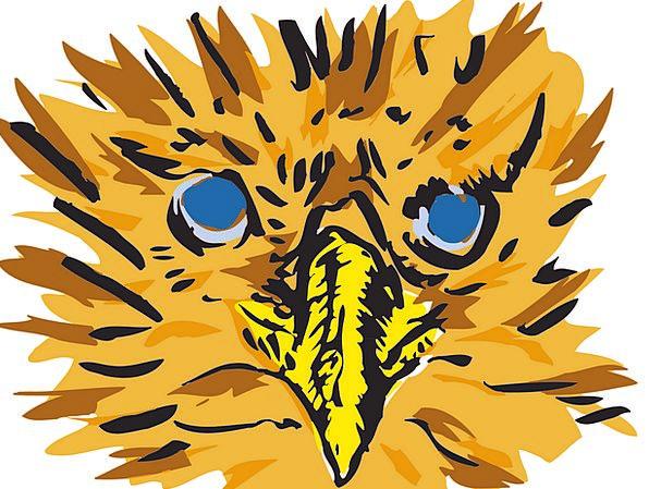 Eyes Judgments Fowl Beak Bill Bird Staring Gazing