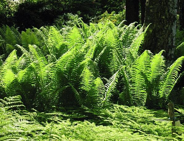 Fern Leaf Landscapes Nature Green Lime Forest Glad