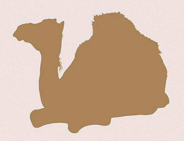Dromedary-Camel Physical Background Contextual Ani