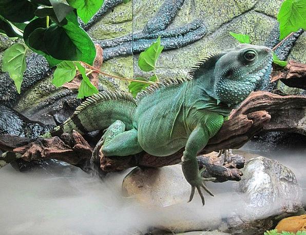 Lizard Landscapes Nature Water Aquatic Aquarium Na