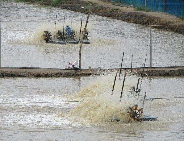 Salt Pan Saline Salty Brine Kundapur Water Aquatic