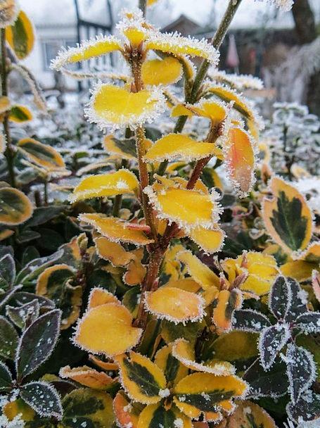 Winter Season Landscapes Nature Winter Magic Frost