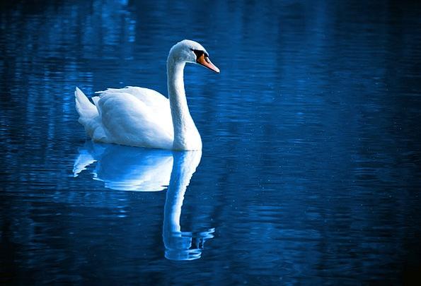 Beautiful Lovely Fowl Blue Azure Bird Peace Calm T