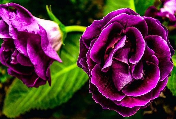 Purple Flower Landscapes Floret Nature Purple Elab