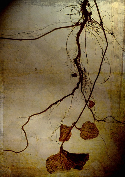 Roots Origins Droopy Art Painting Hanging Textured