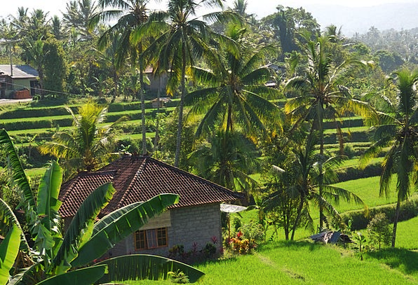 Bali Landscapes Nature Green Lime Paddy Nature Cou