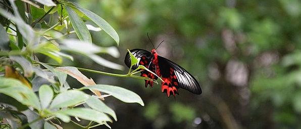 Butterfly Landscapes Nature Butterfly House Tropic