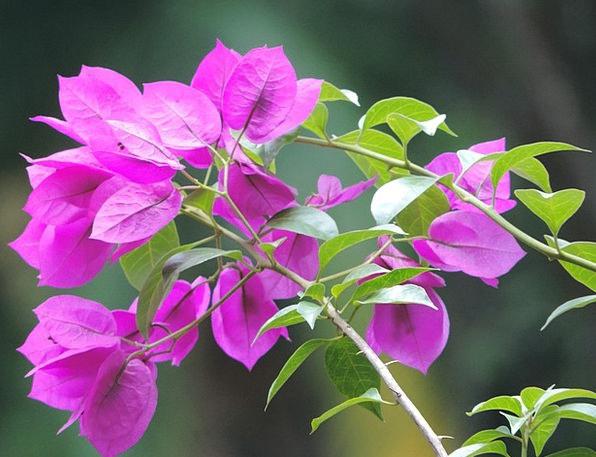 Flowers Plants Landscapes Plot Nature Delicacy Fra