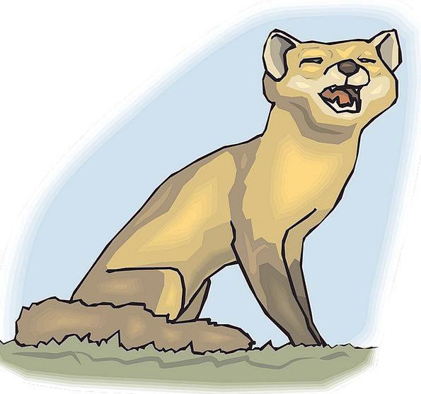 Baby Darling Blue Grass Lawn Sky Fox Deceive Tail