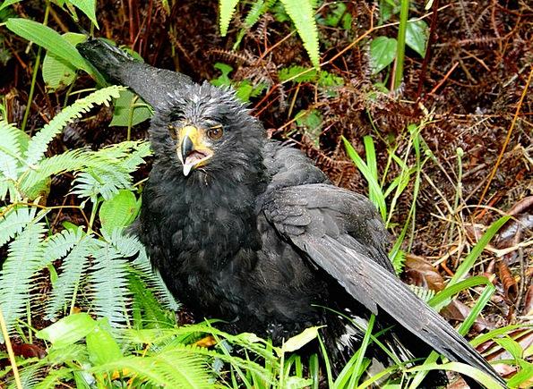 Bird Fowl Natures Black Bird Birds Scary Frighteni