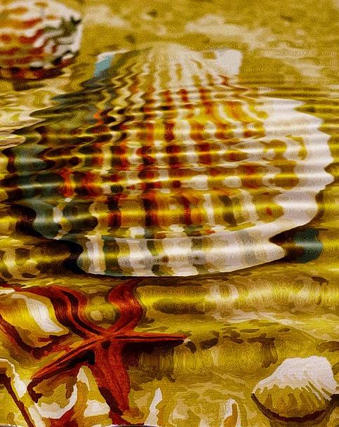 Wave Upsurge Vacation Bomb Travel Starfish Shell H