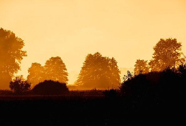 Colors Insignia Landscapes Initial Nature Fog Earl