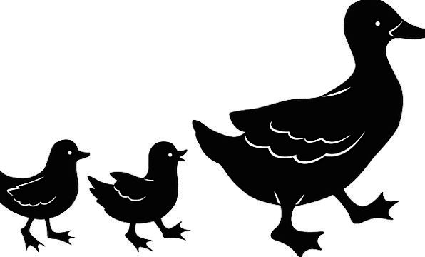 Duck Stoop Chickens Mother Ma Chicks Free Vector G