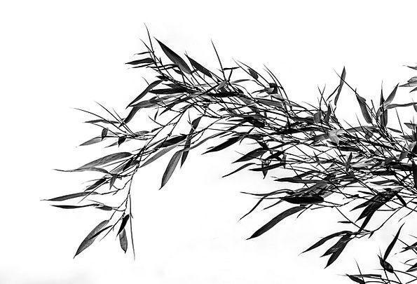 Bamboo Cane Lawn Bamboo Plants Grass Grasartig Bla