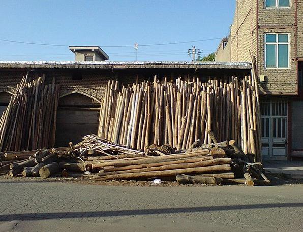 Darwazeh Finance Business Tree Trunks Iraq Buildin