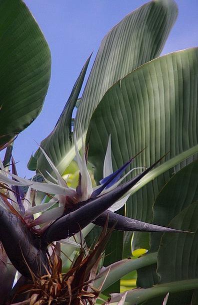 Flower Floret Landscapes Nature Tropical Hot Tropi