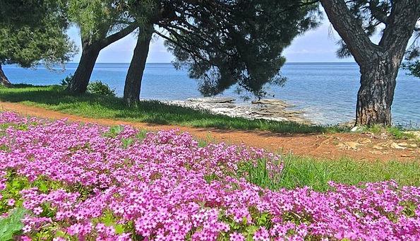 Sea Marine Croatia Adriatic Sea Flower Floret