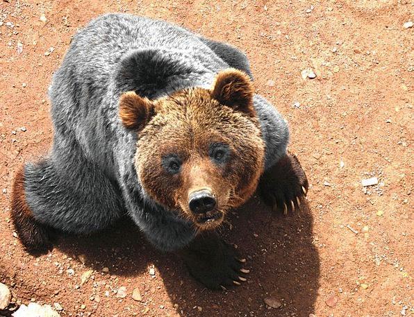 Bear Tolerate Nature Animal Physical Wildlife Faun