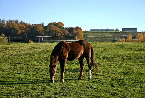 Paddock Enclosure Mount Animal Physical Horse Fenc