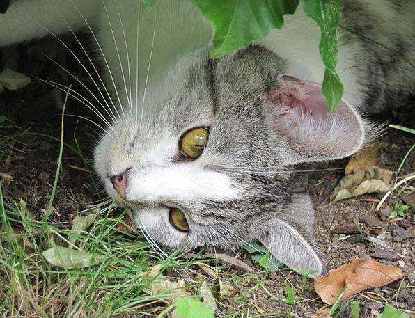 Cat Feline Curious Inquisitive Cat'S Eyes Hangover