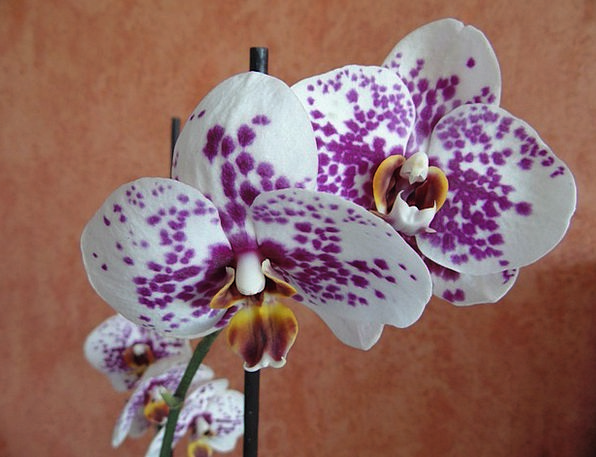 Orchids Landscapes Plants Nature Nature Countrysid