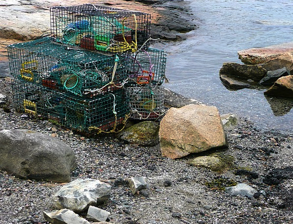 Cages Birdcages Fishery Lobster Water Aquatic Shor