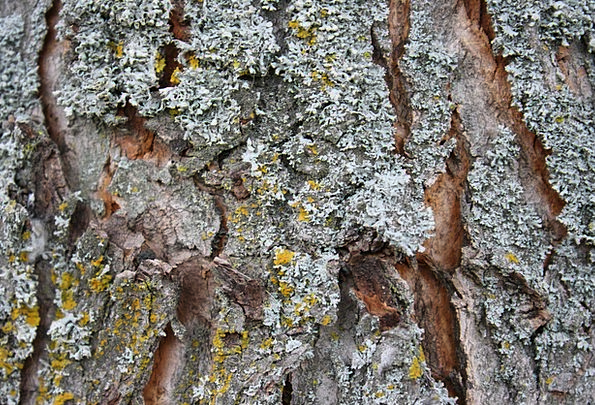 Bark Bay Landscapes Nature Nature Countryside Lich