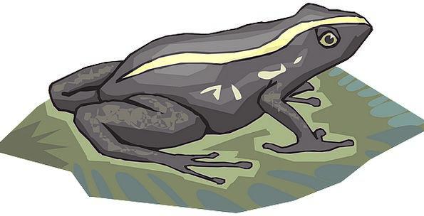Frog Rainforest Forest Amphibian Treefrog Jungle T