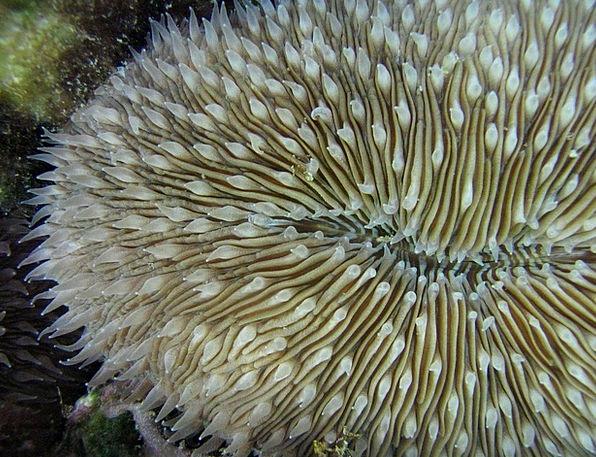 Mushroom Coral Vacation Travel Sea Marine Sea-Life