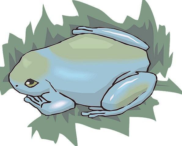 Frog Rainforest Forest Amphibian Terrarium Jungle