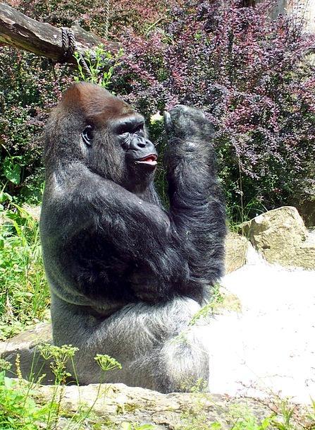 Primate Archbishop Landscapes Brute Nature Ape Chi