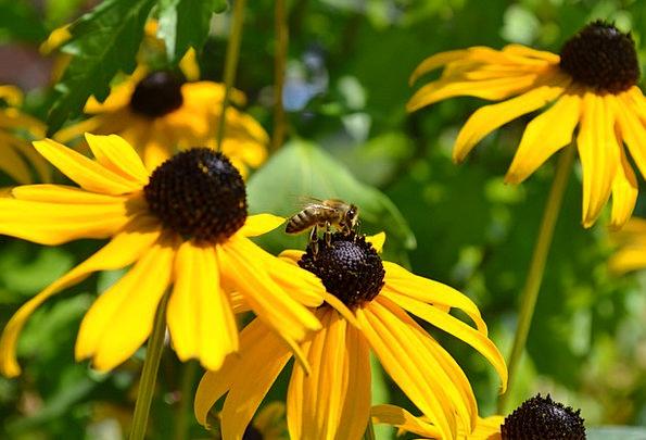 Flower Floret Landscapes Creamy Nature Nature Coun