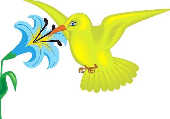 Blue Azure Creamy Flower Floret Yellow Bird Fowl F