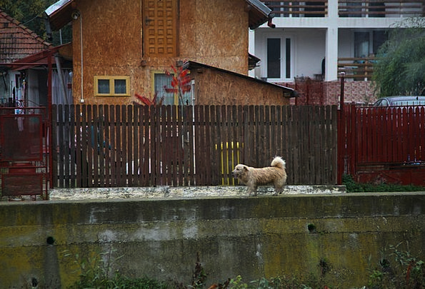 Dog Canine Republic Rural Country Romania Outdoor