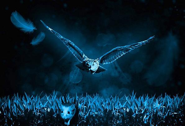 Owl Landscapes Nature Hunt Search Mouse Carnivores