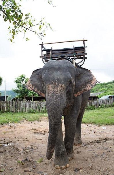 Elephants Monsters Positive Optimistic Thailand