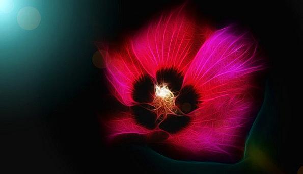 Flower Floret Nonconcrete Art Painting Abstract Co