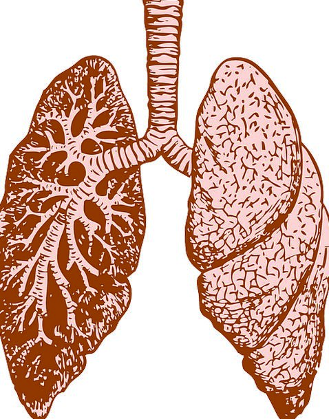 Lungs Structure Human Humanoid Organ Healthcare Di