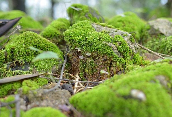 Moss Lime Rock Pillar Green Forest Floor Understor